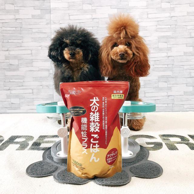 """✨✨✨  🍽🍽🍽  ACE&JOYの健康サポート✨✨ 新しいドッグフードに切り替えます‼️  少量ずつ混ぜて与えていますが とても食いつきが良くカリカリフードだけ でも美味しそうに食べています💓  アニマル・ワン QUALITY NO.1🥇 犬の雑穀ごはん《機能性プラス アクティブ》 Fukuoka JAPAN🇯🇵 animal_one_official ※フードは800gサイズです  愛犬の健康を第一に考え """"ひとも食べられる""""ペットフード✨ のコンセプトに共感しました💞  九州産あたりどりを贅沢に使った 総合栄養食です🍽 365日食べるものだから おいしさだけでなく、安全も‼️  フードボウルは愛用中のマンマミーヤ✨ 機能的にもデザイン的にもお気に入りです‼️ manmamiya_jp  次回はLet's #ミーヤチャレンジ 🎶 で食事中をレポートします✨✨   ・・・   #ドッグフード #いぬすたぐらむ #犬のごはん #犬の雑穀ごはん  #グルテンフリー #ペットの健康  #犬の食育 #食育 #アニマルワン  #犬の健康 #国産ドッグード #ヒューマングレード #腸活ごはん #被毛ケア #体調管理 #雑穀米 #九州産 #あたりどり #雑穀ミックス #ジャパンクオリティー #愛犬ごはん #manmamiya #マンマミーヤ  #フードボウル #犬用食器スタンド  #レッツミーヤチャレンジ  #littlefactory #大人気のフードボウル #トイプードル多頭飼い🐩"""