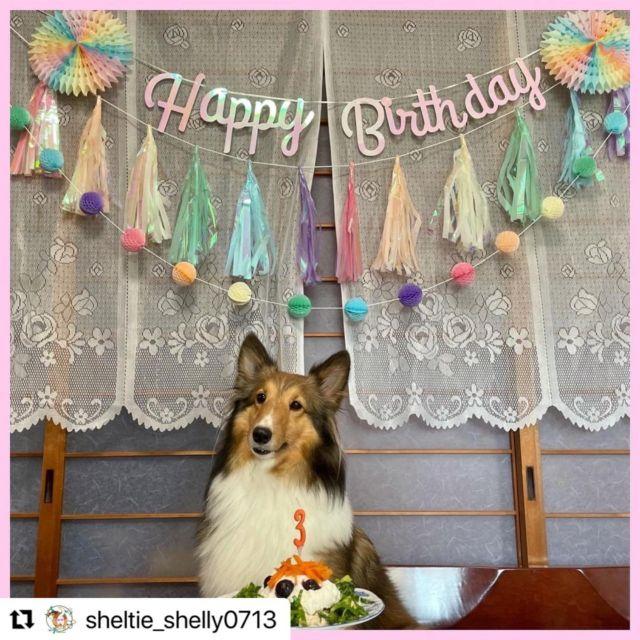 #Repost @sheltie_shelly0713 with @make_repost ・・・ 9/22 シェリーちゃん 3歳のお誕生日🎉 お誕生日ケーキ🎂 新しいフードボウル🥣 大好きなZIWIとオリジンのおやつ🌟  今年も色んな人にお祝いしてもらえて 沢山良い物も買ってもらって 幸せな誕生日だったね☺️✨  ずっと買ってあげようと思ってたマンマミーヤ(フードボウル)も ワンパークさんでお取り寄せしてもらい購入できました🐕 普段のボウルがかなり低かったから 今はかなり食べやすそうにしてます😋 ✨  来年も盛大にお祝いしましょう✨✨  #マンマミーヤ #LittleFactory #保護犬 #保護犬を家族に #保護犬出身 #シェルティ #シェットランドシープドッグ #sheltie #shetlandsheepdog #いぬすたぐらむ  #犬のいる暮らし #いぬのいる暮らし #犬バカ部 #いぬバカ部  #犬好き  #dogstagram #Orijen #オリジン #acana #アカナ  #バイオロジックフード  #trumpets #トランペッツ #福岡犬民  #ziwi #ジウィ #ziwipets #ziwipeak #ジウィピーク
